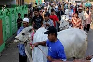Jelang Idul Adha, Ternyata Banyak Tradisi Unik di Berbagai Daerah, Mulai Mepe Kasur hingga Manten Sapi
