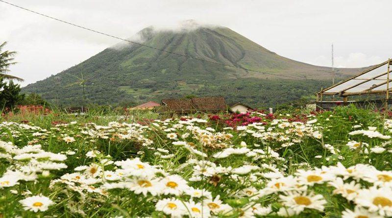 Ini 5 Wisata Bunga di Indonesia Serasa di Luar Negeri